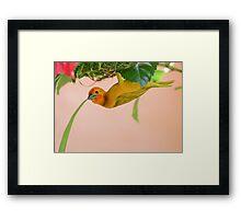 Golden Palm Weaver 3 Framed Print