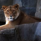 On A Ledge by Jarede Schmetterer