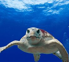 Beautiful Ocean Turtle, HD Photograph by tshirtdesign