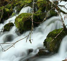 Twiggy Falls by CarrieAnn