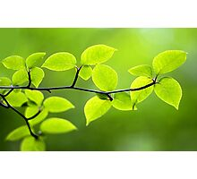 Foliage Photographic Print