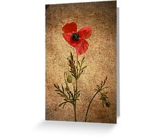 What's poppy doing? Greeting Card