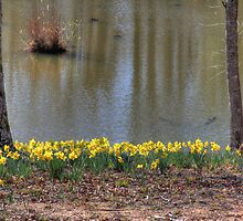 Daffodils overlooking a pond by Pignoodles