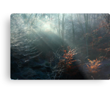 First Rays on a Frosty Morning Metal Print
