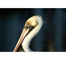 Pelican close up. Photographic Print