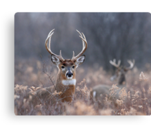White-tailed Deer In The Brush Canvas Print