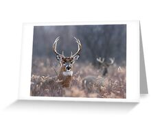 White-tailed Deer In The Brush Greeting Card