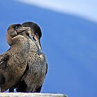 Cormorant Pair by Sue  Cullumber
