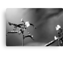 Sweet Pea Flower in Black and White Canvas Print