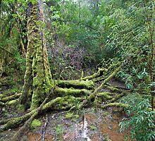 tasmanian forest by marko1953
