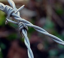 BARBED WIRE by Johan  Nijenhuis