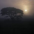 Sunrise Through The Fog by Zachary Golus