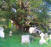 Ancient yew tree by naturalimages