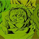 roses green by andrew j wrigley