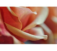 Details of Rose Petals Photographic Print