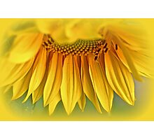 Sunshine On A Stalk Photographic Print