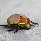 Christmas Beetle by Catherine Davis