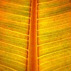 yelow leaf (series)....! by sendao
