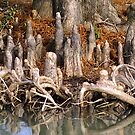 Cypress Knees by Samantha Dean