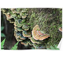 Forest Fungus Poster