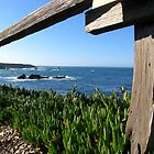 Pacific Ocean from Mendocino  by daytona235
