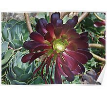 Sub Tropical Flower Poster