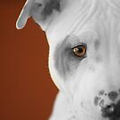 freckles the pit 3 by Susanne Correa