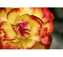 Colorful petals Photographic Print