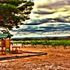 Vineyard Playground by Jennifer Craker