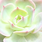 Minty Rose by twodoggardens