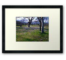 Field of Crocus Framed Print