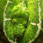 Snake by baldy