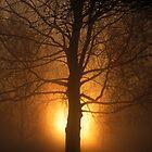 Sunrise by Trine