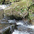down stream by paula cattermole