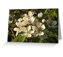 Apple Blossom White Greeting Card