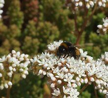 Bee by Alexander Mcrobbie-Munro
