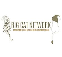 Big Cat Network Logo Photographic Print