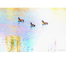 Sunny Abstract Geese Photographic Print