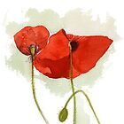 Watercolour Illustration of Red poppies by naffarts
