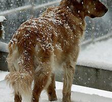 Snow Dog by Magnum1975