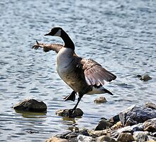 "The Karate ""Goose""? by PamelaJoPhoto"