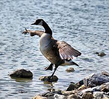 "The Karate ""Goose""? by PamelaJoPhoto"
