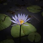 Mauve Water Lilly by Keith G. Hawley