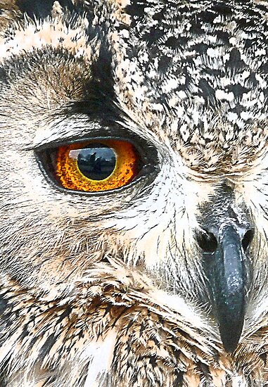 Eagle (Owl) Eye by lisa1970