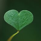 Heart shaped by Angelique Brunas