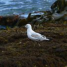 Mr Seagul meets the Sea by Karina  Cooper