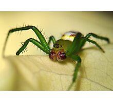 Kidney Garden Spider Photographic Print