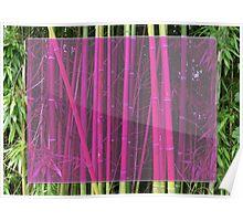 Bambou Poster