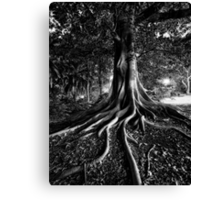 Early Evening In The Garden Of Good And Evil Canvas Print