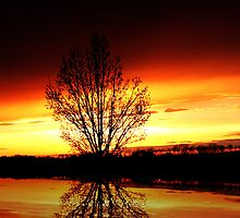 ~sunset~ by Terri~Lynn Bealle